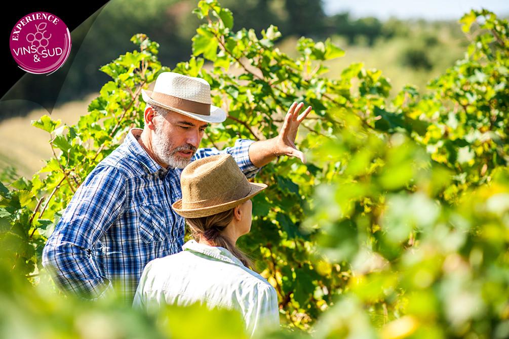 la londe les maures villages a theme sud vins oenologie